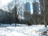 Nieve paraliza Nueva York y otras ciudades del este norteamericano