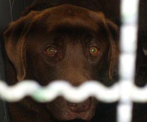 La OTAN planea utilizar perros paracaidistas para apoyar a comandos en zonas de combate