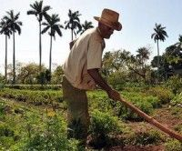 Ajustes economia cubana