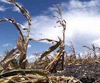 Crisis Alimentaria, fuertes golpes por sequia en la agricultura