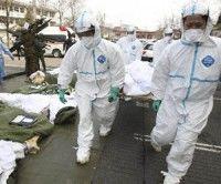 La OMS cree que los riesgos para la salud de la población de Japón son bajos