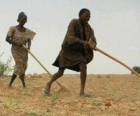 Cinco millones sufren hambre por sequía en Africa