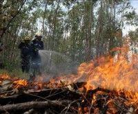 Cambio climático: sequía e incendios conspiran