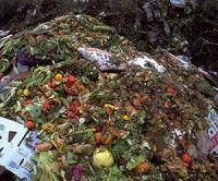 La cantidad de alimento arrojado a la basura per cápita en Europa y Norteamérica alcanza anualmente los 95 y 115 kilogramos