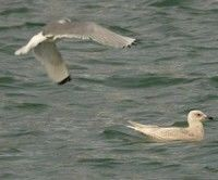 Migración aves marinas