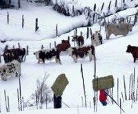 Fuertes nevadas en Chile