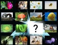 especies descubiertas