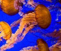 La especie es una amenaza para el ecosistema. (Thinkstock)