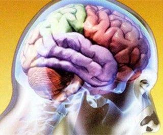 Neurocientíficos del mundo destacan desarrollo de esa rama en Cuba.