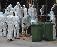 EEUU compara el 'supervirus' de la gripe con la bomba atómica