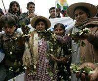 Bolivia defenderá uso de hoja de coca en Cumbre Social de las Américas