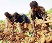 UNICEF: Existen unos 400 millones de niños esclavos