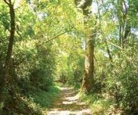 Debaten en Nicaragua sobre mayor reserva forestal de Centroamérica