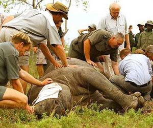 caza-furtiva-elefantes