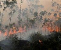 Unas 10 mil hectáreas han sido arrasadas por incendios en Ecuador.