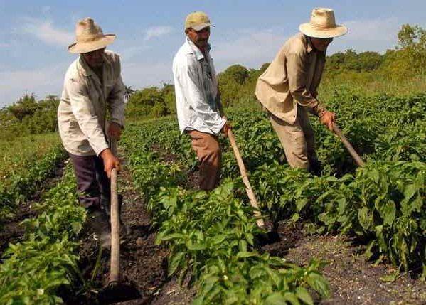 Camagüey por explotar más oportunidades de inversión extranjera.