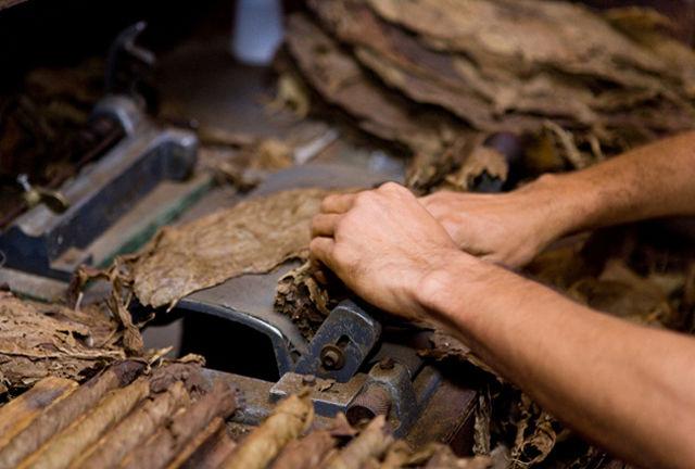 El tabaco es estimulante. Tiene una rentabilidad buena. Mientras más rendimiento y calidad, el margen comercial aumenta.
