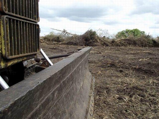 La pelea contra el marabú entrega tierras vírgenes para el fomento de nuevos polos productivos. Foto: Miozotis Fabelo