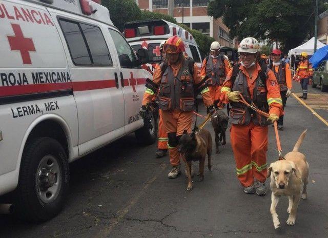 Rescatistas canadienses con binomios caninos previo a un ingreso al edificio derrumbado en Coquimbo, colonia Lindavista. Foto Guillermo Sologuren