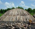 El marabú es utilizado en la producción de carbón vegetal en Cuba