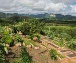 El encuentro, convocado por la Asociación Cubana de Técnicos Agrícolas y Forestales, constituye el escenario propicio para intercambiar entorno a las fortalezas y debilidades. Foto: ACN