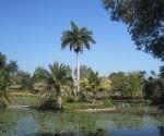 Las riquezas florísticas y faunísticas de Cuba guardan un extenso patrimonio forestal.