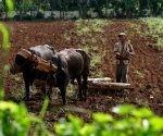 Entrega de tierras en Cuba